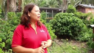 dokumentari tenom fatt choi coffee 2017 dari ladang ke secangkir kopi