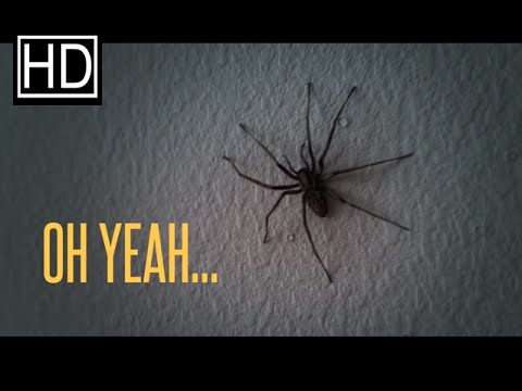 NOPE! Spider infested apartment!