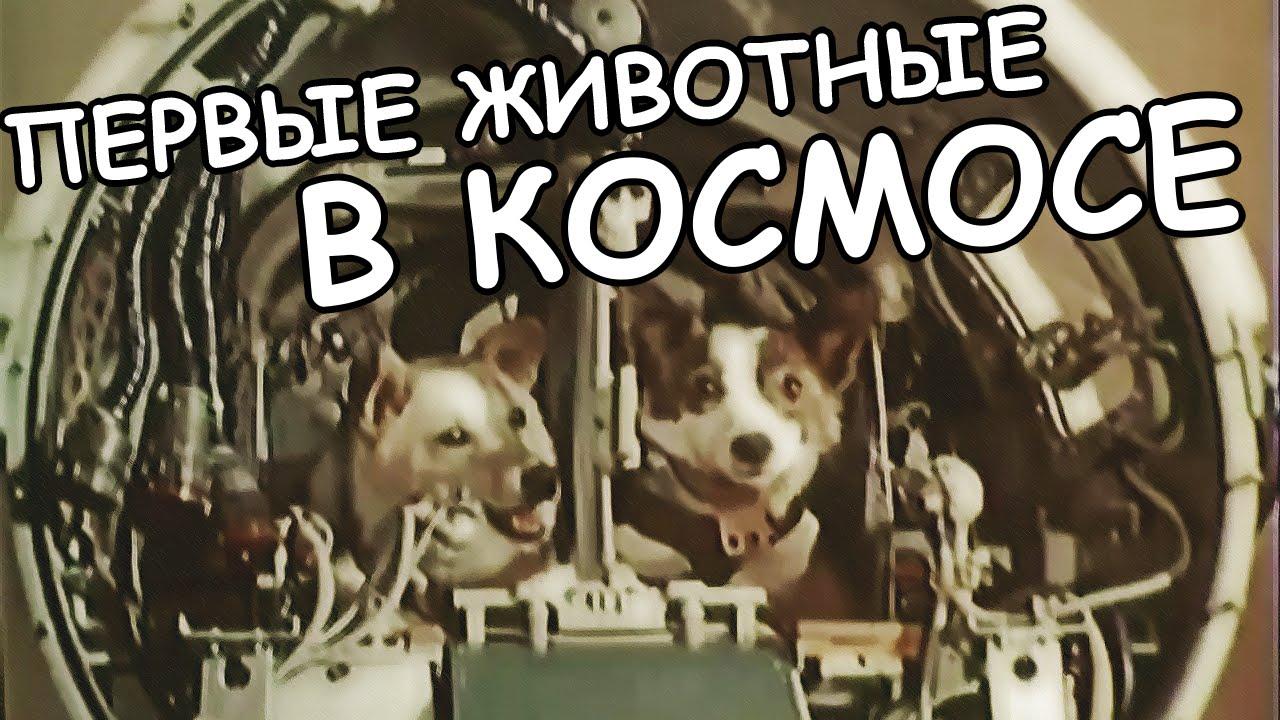 Картинки по запросу Животные в космосе
