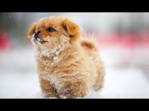 90 Seconds of Adorable Puppies Playing in Snow – Cute Puppy Dogs in Snow Compilation