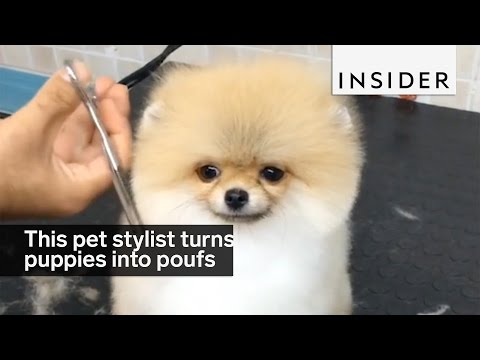 Harlem dog spa pampers pups to perfection funnydog tv for A perfect pet salon