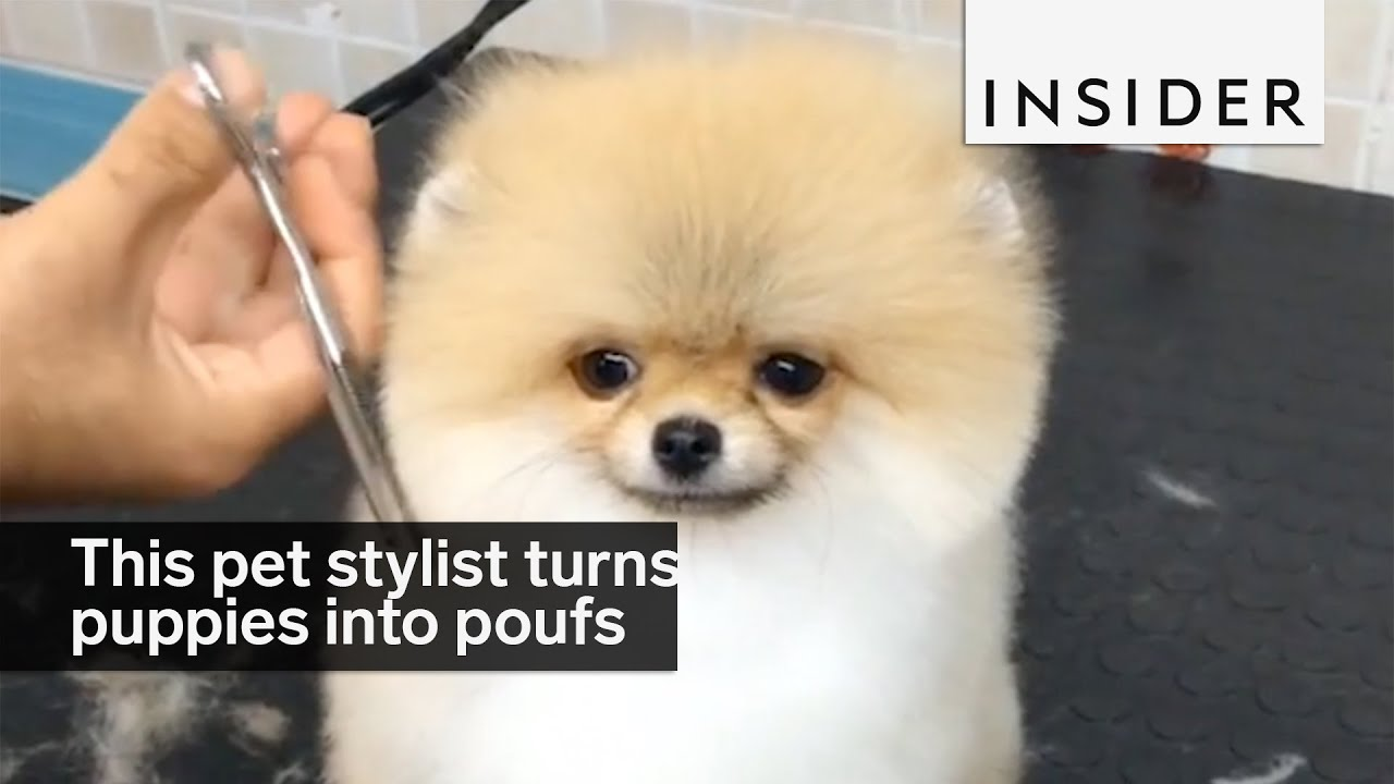 This Pet Stylist Turns Puppies Into Perfect Poufs Youtube