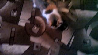 Нападение кошки на человека!