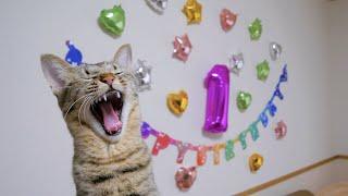 1歳の誕生日に特別なごはんをあげたらとっても喜んでくれました♪