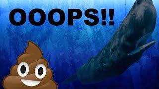 Sperm whale POOP!