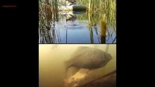 карасёвая онлайн рыбалка в камышах(рыбалка с двумя камерами фиксирующие одновременно поведение рыбы и поплавок в онлайне. приятного просмотр..., 2015-09-11T01:02:43.000Z)