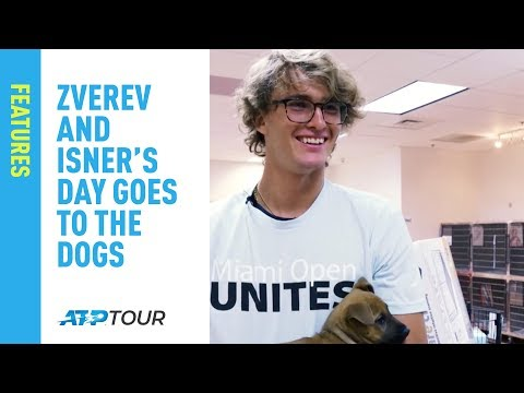 Zverev And Isner's Day Goes To The Dogs