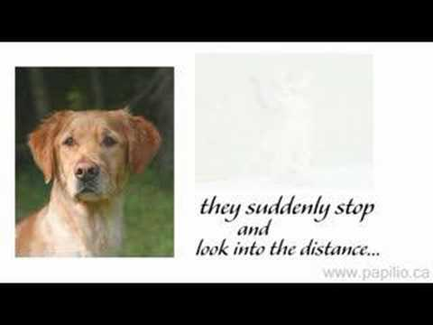What Happens During a Pet's Euthanasia Appointment | PetHelpful