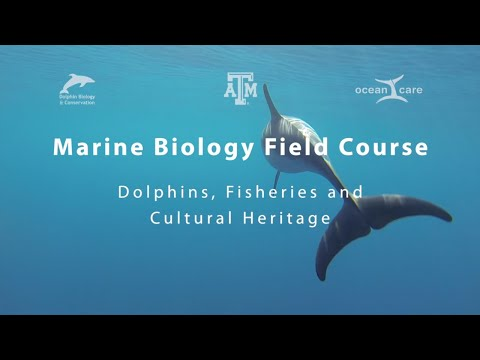 Marine biology field course in Greece
