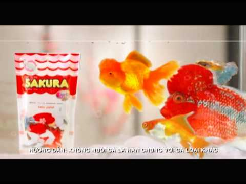 Sakura TV ad 30 Sec Vietnam 04