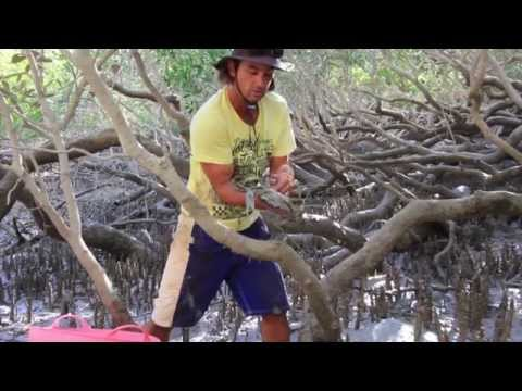 how to catch mud crabs using a hook