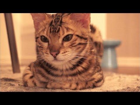 半目で寝る猫と白目をむいて寝る猫