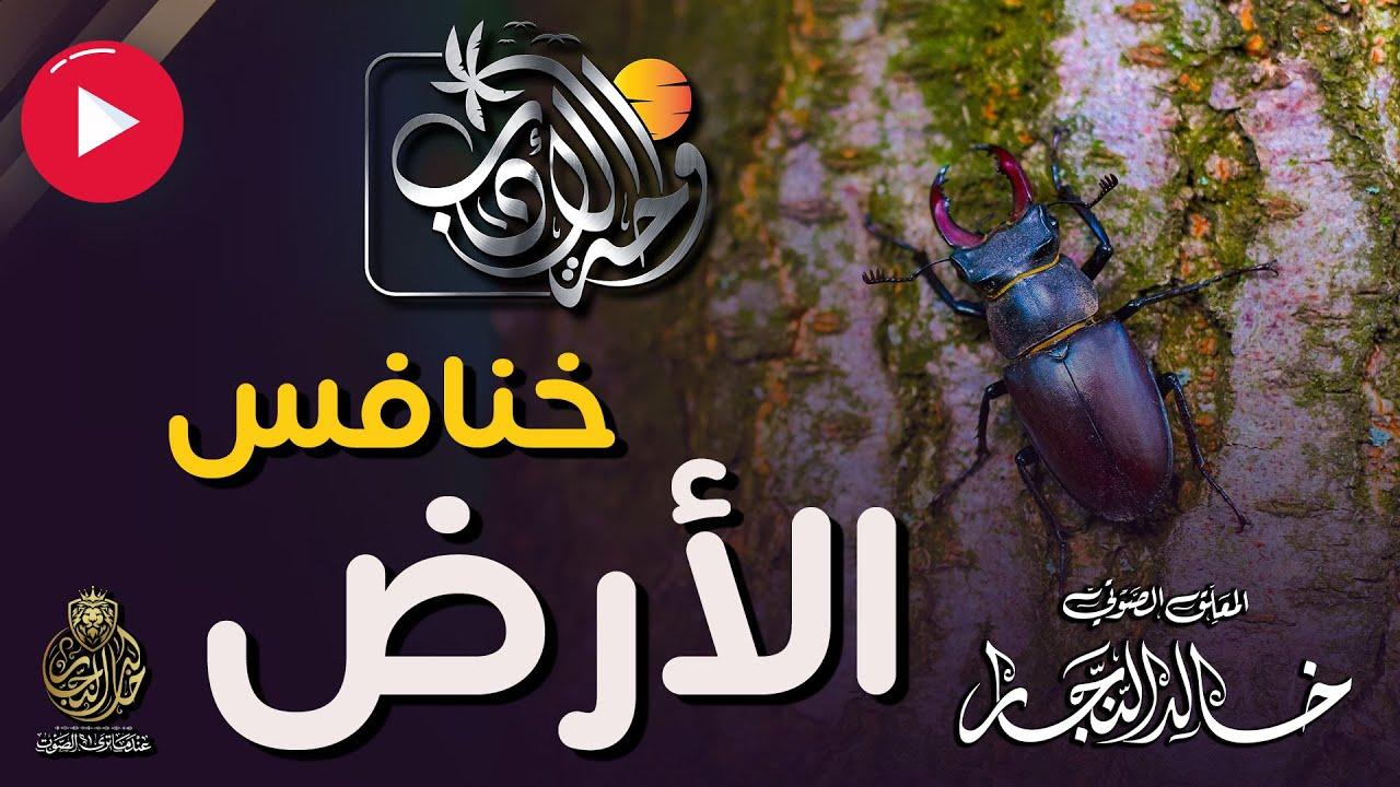 قصيدة خنافس الأرض | للشاعر جعفر عباس | واحة الأدب | مع خالد النجار ?