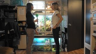 Экзотические питомцы в квартире: змея, черепаха, геккон и хамелеон
