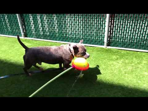 New Jersey Dog Rescue - ADOPTIONS - Rescue Me!