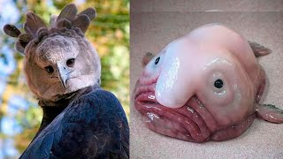 10 STRANGE ANIMALS With HUMAN Characteristics