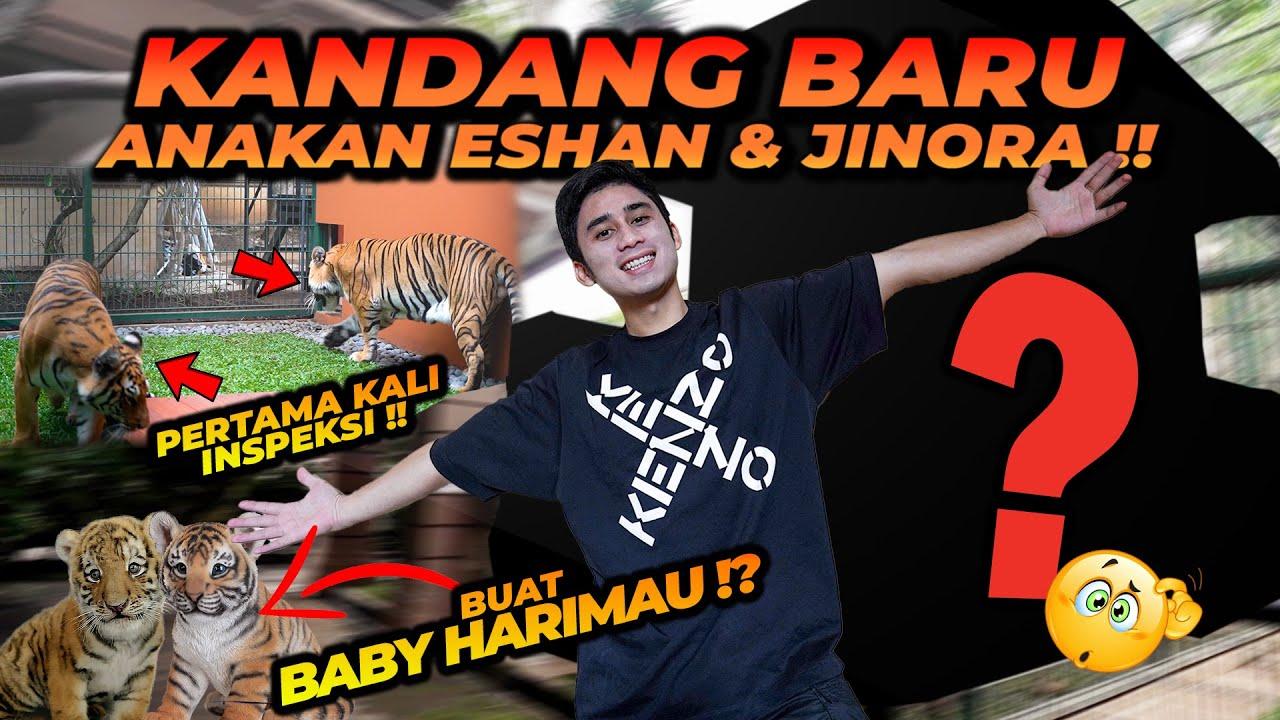 REVIEW KANDANG BARU BUAT ANAKNYA ESHAN JINORA !