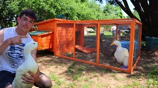 new-massive-home-for-my-baby-ducks-must-watch