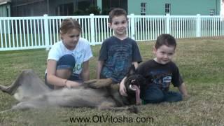 Ot Vitosha Malinois and Kids thumbnail