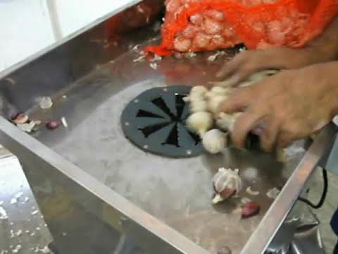 debulhador de alho dca-2000-mini maquina AGMAC - teste debulhando alho nro 3 e 4 comercial