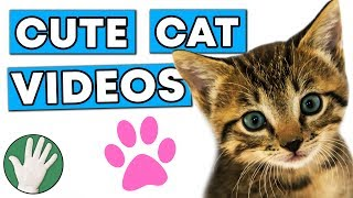 Cute Cat Videos - Objectivity #186