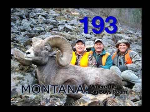 STATE OF MONTANA BIGHORN SHEEP LICENSE