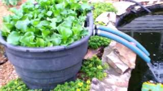 kcvers How to have clear koi pond water garden part 1