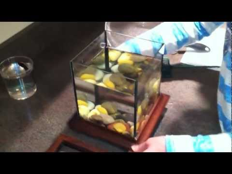 How To Clean A Betta Bowl