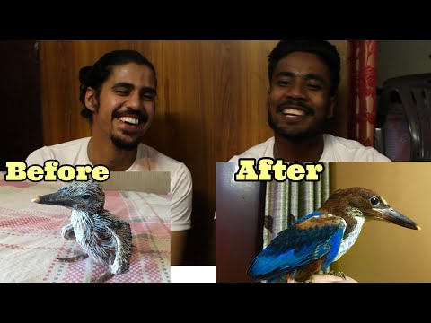 INDIAN KINGFISHER chicks from day 1 | We did it!
