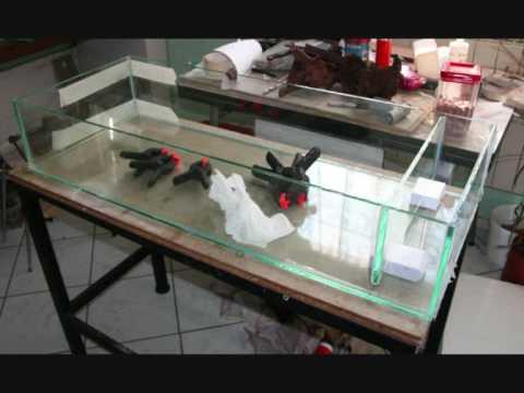 Filtre filtration d cantation aquarium youtube for Filtre petit aquarium