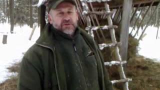Opolscy leśnicy apelują o dokarmianie zwierząt w lasach na zimę