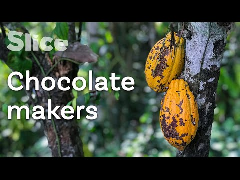 Cocoa farming in Cuban lands | SLICE