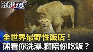 全世界最野性飯店!野熊看你洗澡、獅子陪你吃飯在你旁邊打呼!? 關鍵時刻 20180522-3 朱學恒
