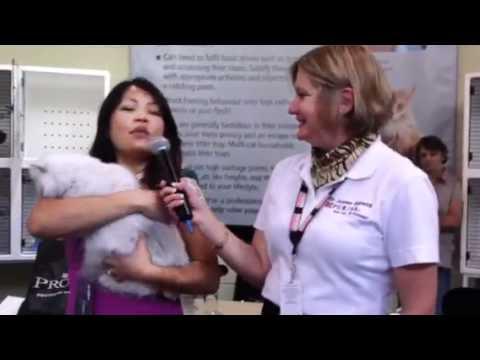Royal Easter show 2011 - cat breed presentation longhair bu