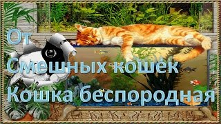 От Смешных кошек Кошка Беспородная