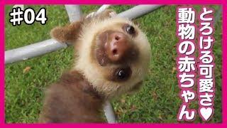 とろけるほど可愛い、癒しの動物の赤ちゃん動画をまとめました! チャン...