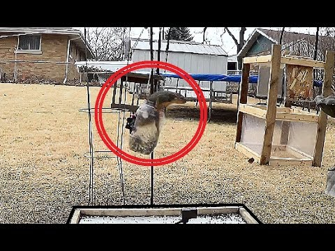 Squirrels get a Free Ride in a Huge Jar for not being Nice