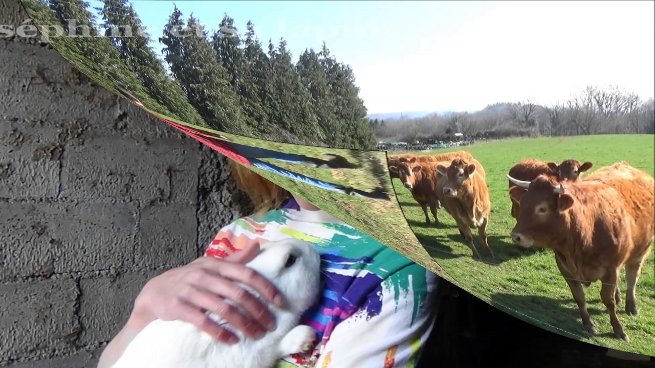 La ferme en folie youtube - Vache en folie ...
