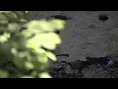 Arlington Open Spaces: Mill's Brook
