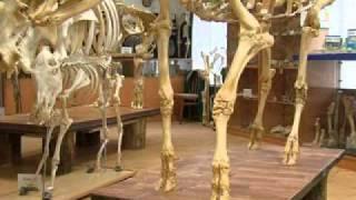 Днепропетровские студенты создали уникальный скелет редкого животного ВИДЕО   Девятый Канал   Mozilla Firefox