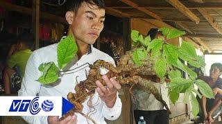 Dân Quảng Nam phát hiện sâm Ngọc Linh 100 tuổi | VTC