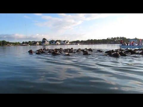 سباحة البوني، طراز سباحة أمريكي  - نشر قبل 14 ساعة