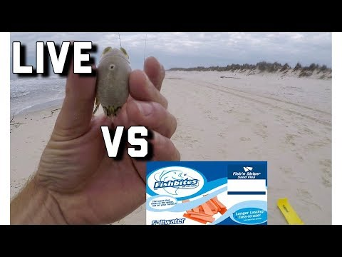 Surf Fishing- Fish Bites VERSUS LIVE Bait