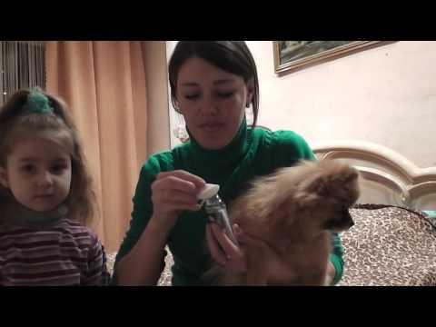 Вопрос: Как избавиться от неприятного запаха изо рта у собаки?