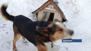 Кому и зачем понадобилось травить собак из приюта «Ласка»?