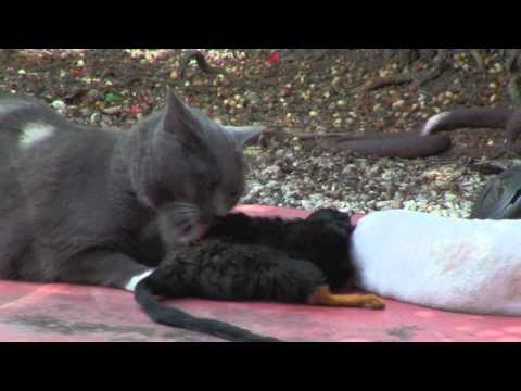 Tamba le chat, et Kenya le singe