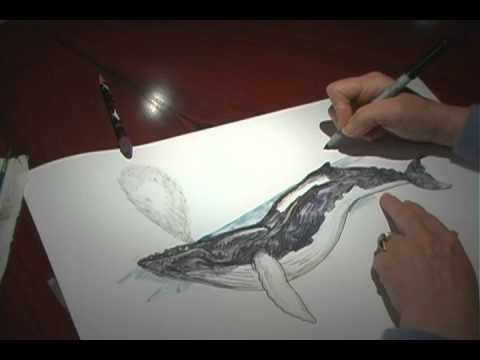 How To Draw Whale