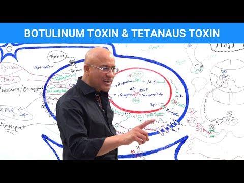 Botulinum Toxin & Tetanus Toxin Mechanism