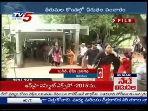 Cheetah Wandering In Tirumala | Devotees In Fear : TV5 News