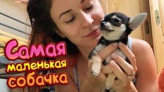 ЙОДА - САМАЯ МАЛЕНЬКАЯ СОБАЧКА / Возвращение домой
